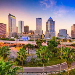 Tampa fibroblast